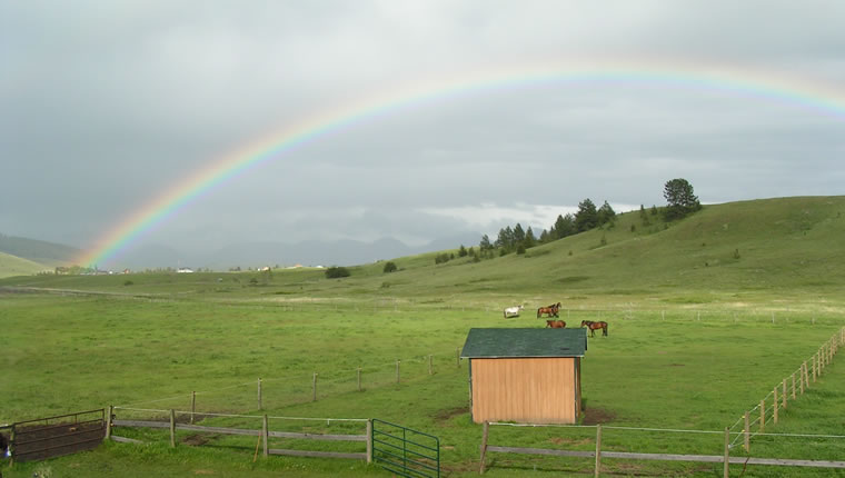 Montana Trakehners and rainbow