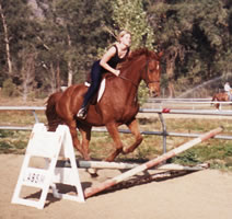 Trakehner-Top-Priority